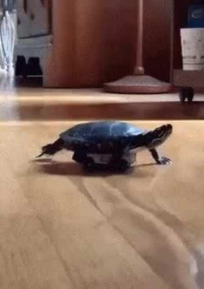 This turtle using unconventional means of transport