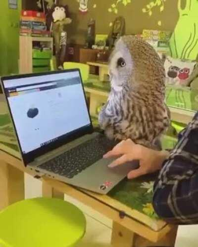 Owls are the cats of the air
