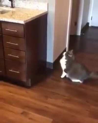 Cat's mood is meh.