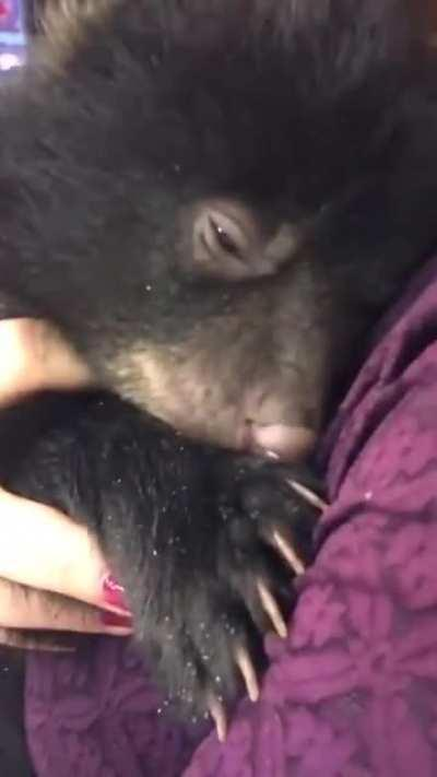 This is the first time I've heard the Bear Purr, and its the Cutest thing Ever!