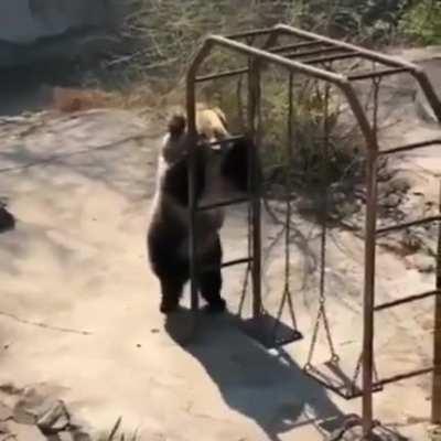 bearsdoinghumanthings