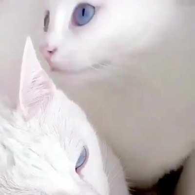 Heterochromia twins