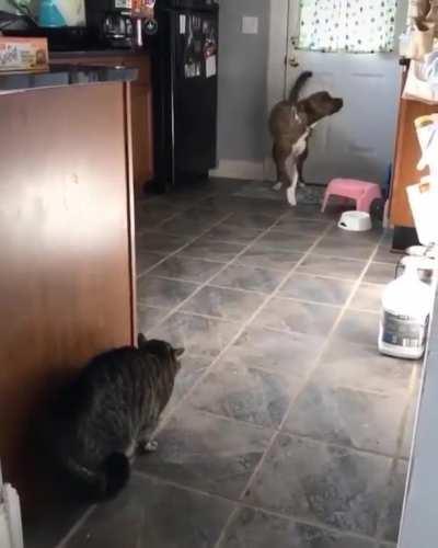 An epic showdown
