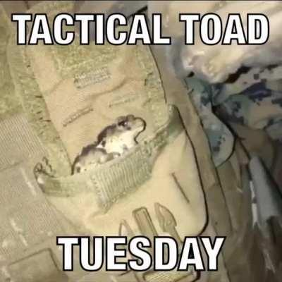 Happy Tactical Toad Tuesday