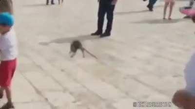 WCGW kicking this rat away
