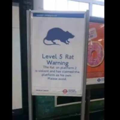 level 5 rat warning