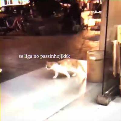 De um tempo para uma dancinha do gato deslizante