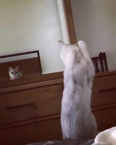I want to see Jeannie and Henry's reaction to this cat who discovered it has ears......
