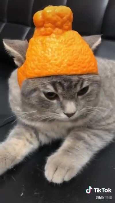 Amazing hat for cat