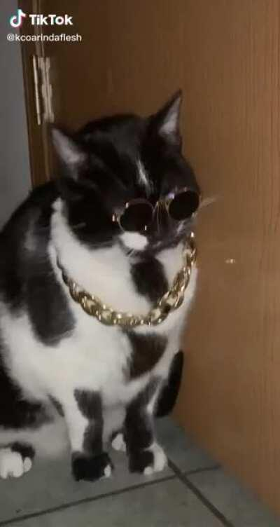 This cat is cooler than me