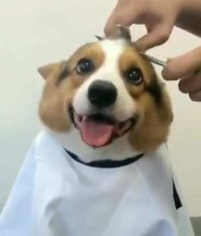 Happy little guy getting a trim.