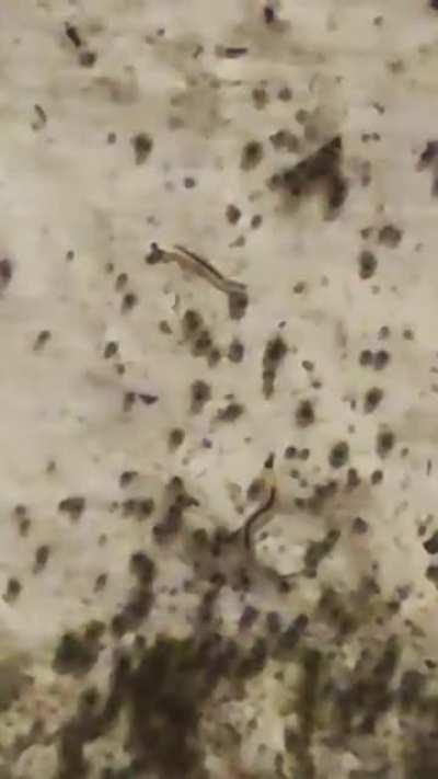 Würmer am Schimmel? was ist das?