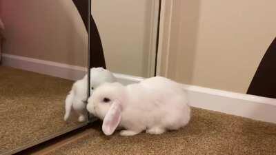 I think our single bunny would like a friend 🥺