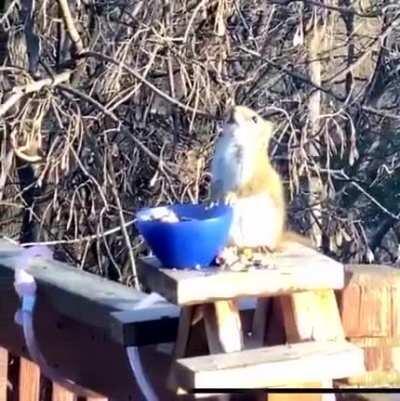 А орешки не простые...