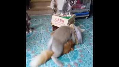 tavşan bey ne yapıyorsunuz