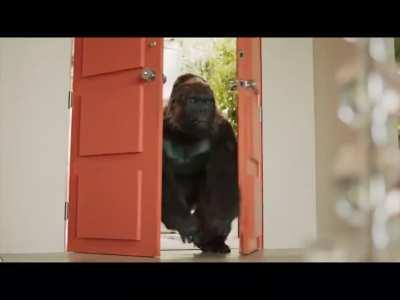 I love gorilla glue commercials