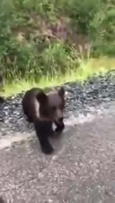 WCGW trying to pet a bear