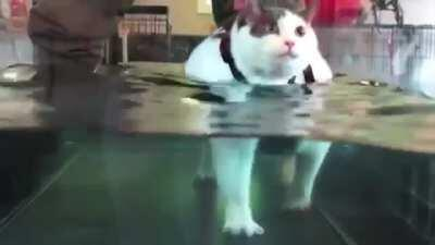 Motivated rotund meow is keeping the beat (sound)