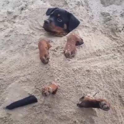 Stuck Doggo