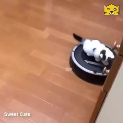 Cute kitty finds a new distraction