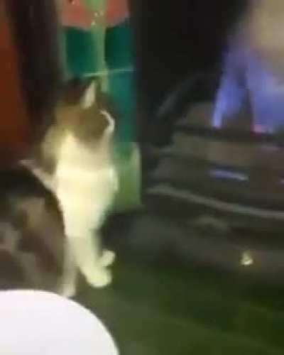 Poor cat meets fire.