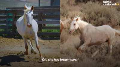 Wild horse sprints to his girlfriend after 2 years apart <3 <3