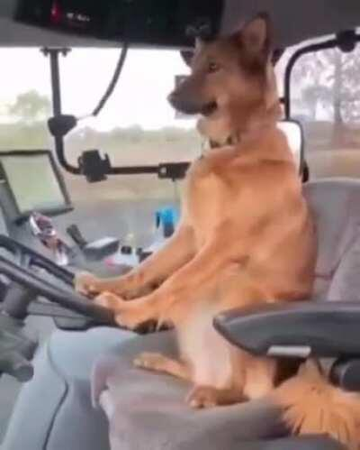 This good boy has the coolest job