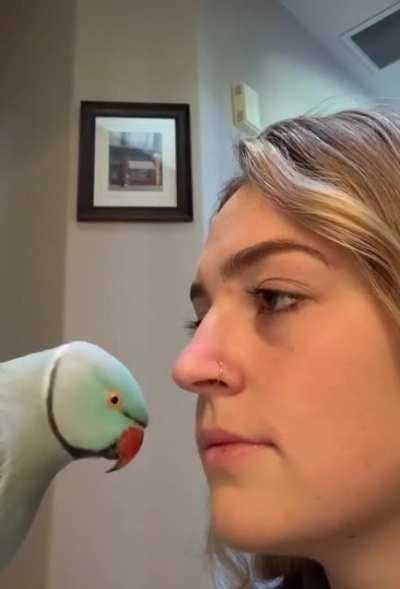 Don't say anything to your bird and see what he does.