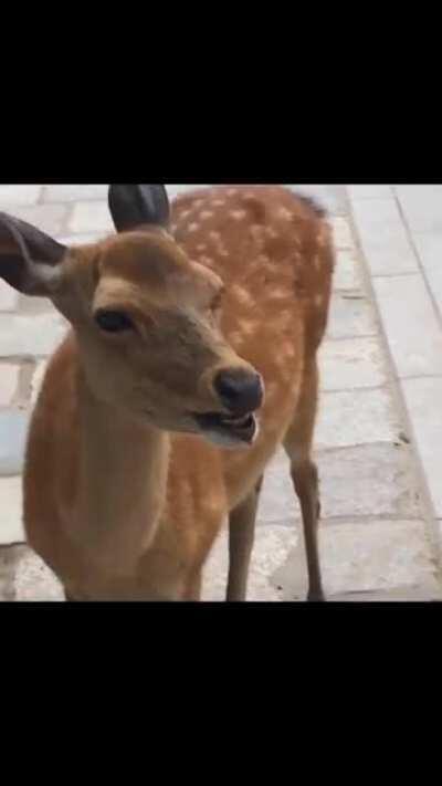 Deer Screeaammm