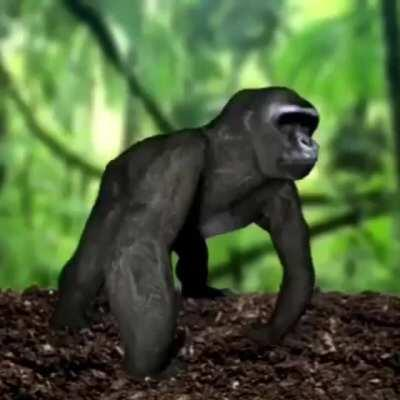 Ape cube!!