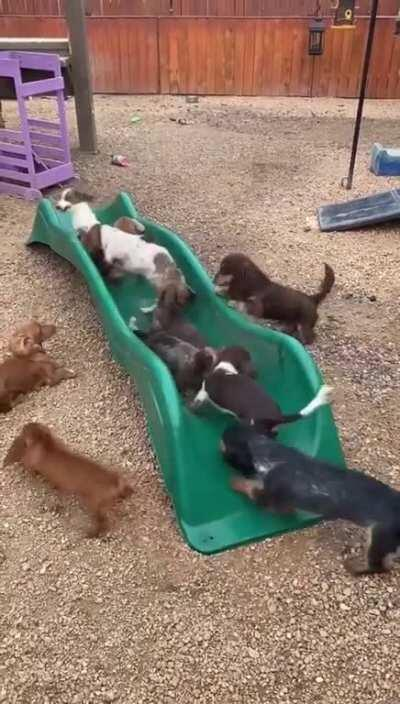 A plethora of playground pups!