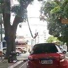 Brazilian spider man