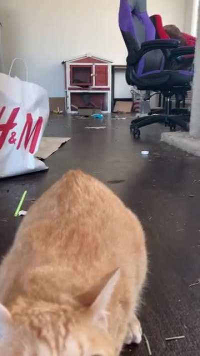 Cat: Acts shitty, knocks over trash, yells, then lashes out. Uncle Rico? More like Uncle Asshole.