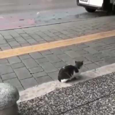 Random Kitten casually attacking pedestrians as they pass by.
