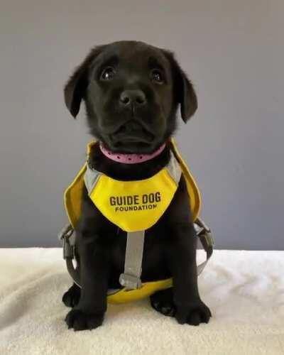 My name is Jessica, I'm training to help my future owner