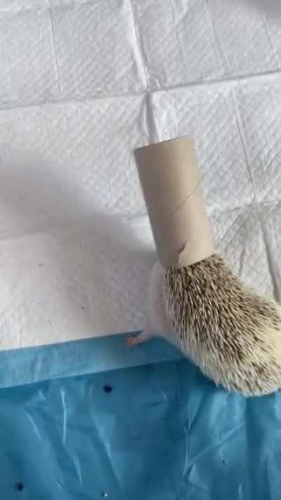 Dopey hedgehog
