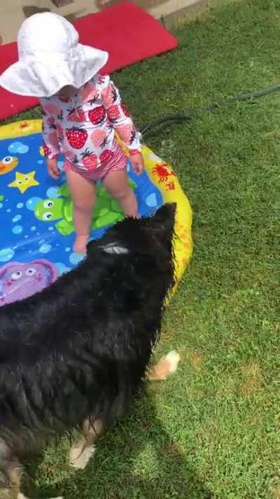 Dog bites water