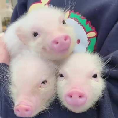 An armful of cutie patooties