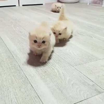 I could watch them walking all day