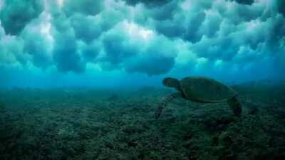 🔥 Sea turtle swimming under the waves