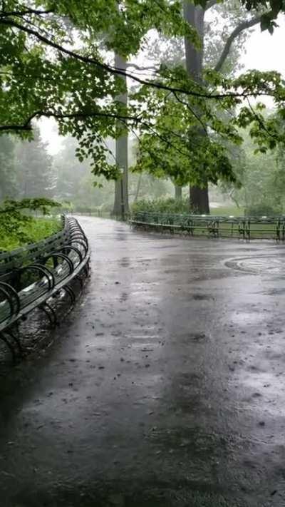 Summer rain in Central Park