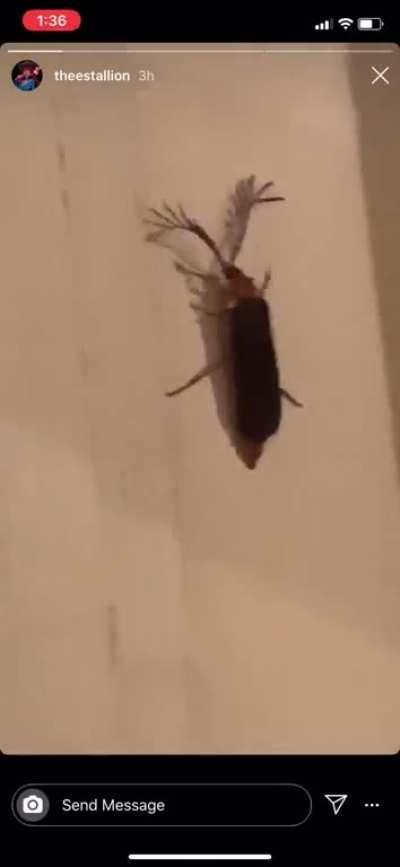 Bitch eyelash bug