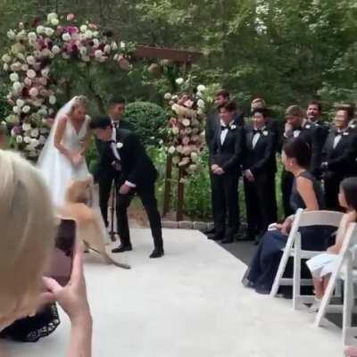 Precious boy during a wedding