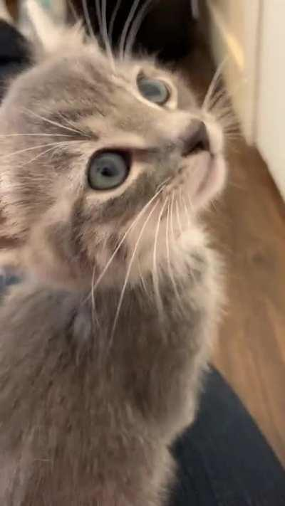 Purrs like a champ, but totally busted meow