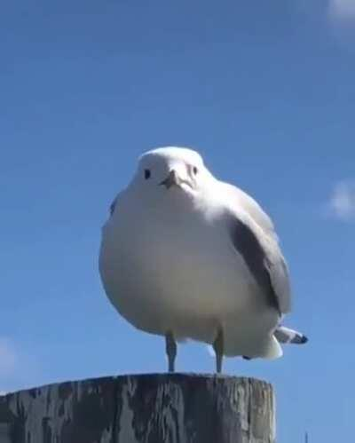 You angered the seagull