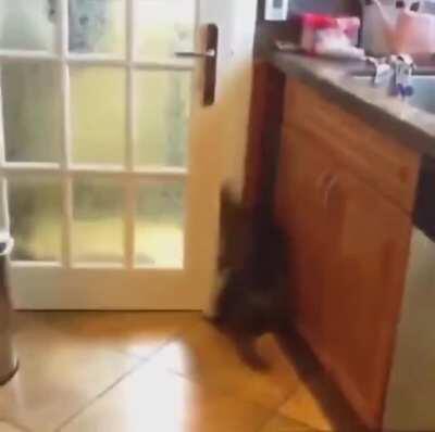 Halal funny cats 720p full movie