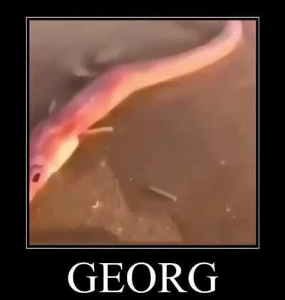 Someone sent this to me today and I can't get it out of my head, what fish it it? Is it fake or mutated or something?