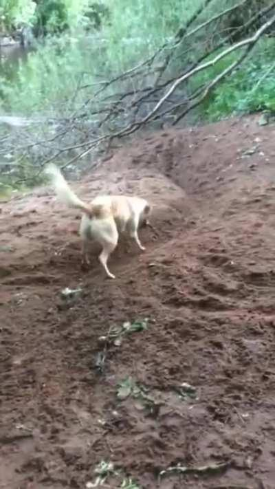 This doggo has invented a new game
