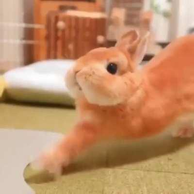 Just a Bunny Being really Cute!