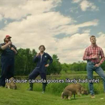 canada gooses